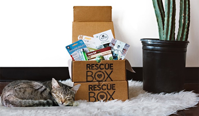 RescueBox cat and box