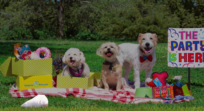 Surprise My Pet dog boxes