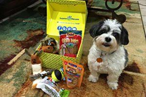 Surprise My Pet subscription box