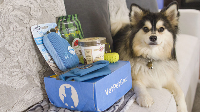 VetPet Box dog subscription box