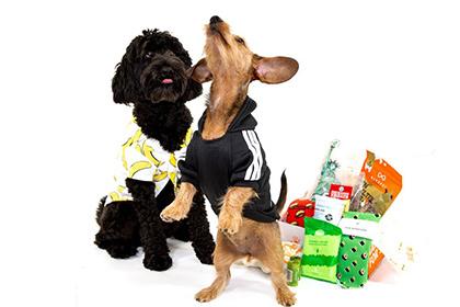 shaggyswag subscription dog boxes